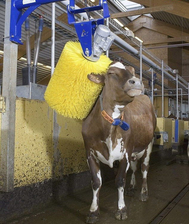 automatic cow brusher