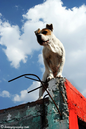 dogs on roofs